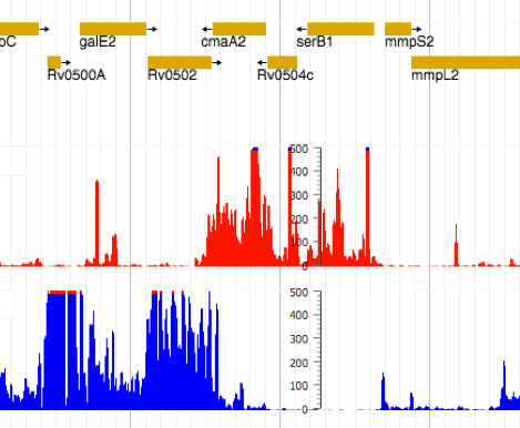 Screen shot of ribosome profiles in M. tuberculosis