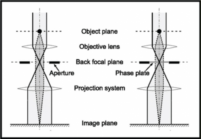 Phase plates are placed in the back focal plane of the objective lens
