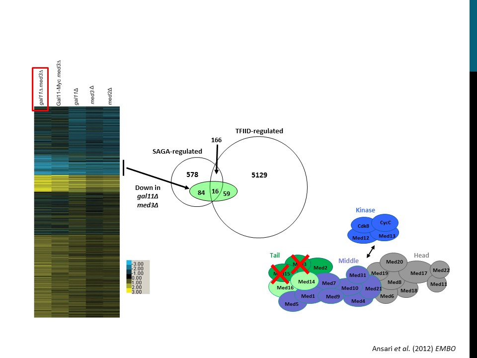 Alternate Mediator Recruitment to TFIID-regulated genes