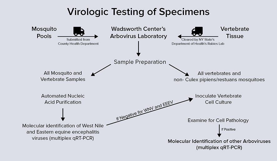 Surveillance: Virologic Testing of Specimens