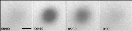 Photo bleached spot in a lipid bi-layer and the subsequent diffusion into the bleached area
