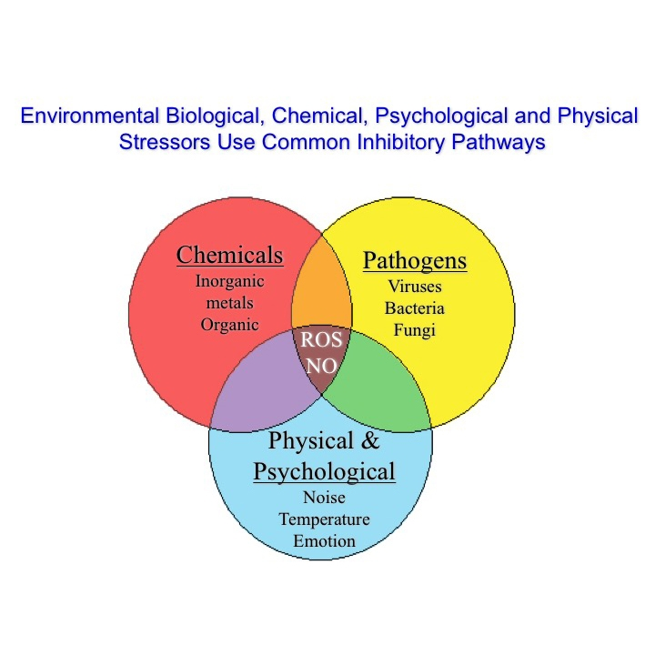 Environmental, biological, chemical psychological and physical stressors use common inhibitory pathways
